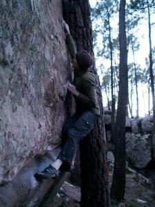 Fun problem, good moves. The tree presents a dab potential when topping out.